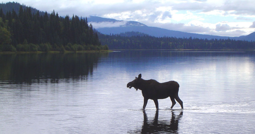 bowron lake